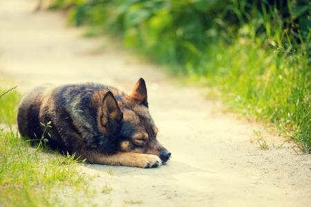 Dog sleeping on dirt road in summer