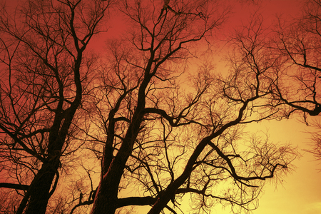 Trees without leaves at sunset light.