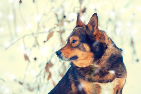 Portrait of a dog walking in snowy forest in winter Stock Photo