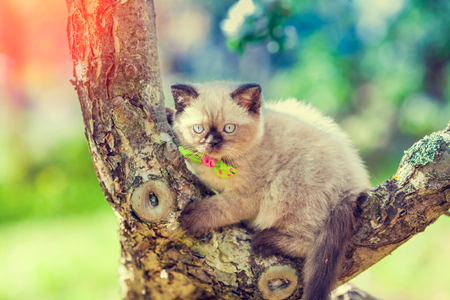 baby seal: Kitten sneaking on the tree in summer