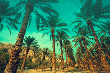 Row of tropic palm trees against green sky.  Silhouette of deep palm trees. Tropic evening landscape. Green colored.