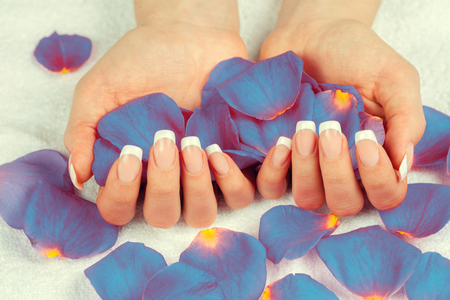 Beautiful female hands with french manicure hold rose petals. Manicure salon.
