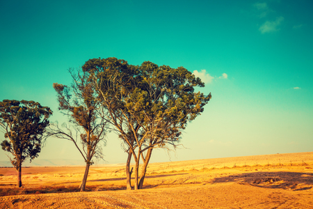 Desert landscape. Trees in desert. Nature Israel