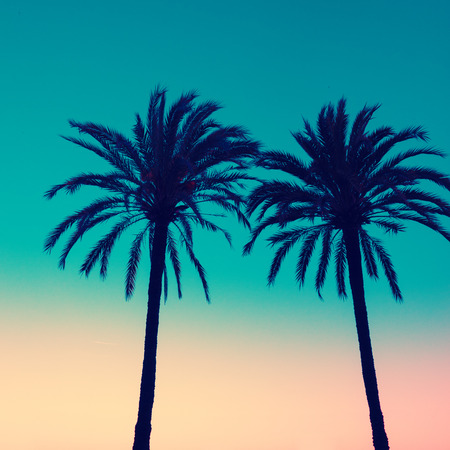 Silhouette of two palms on sunset background