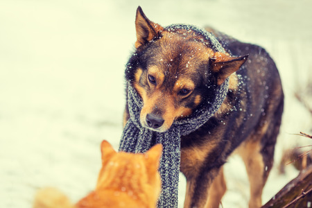 tied in: dog with knitted scarf, tied around the neck and cat sniffing each other in winter Stock Photo