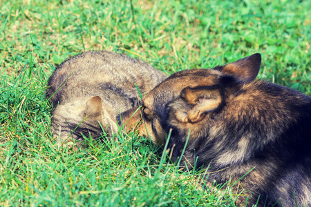Dog and cat are best friends playing together outdoor. Lying on the grass together.
