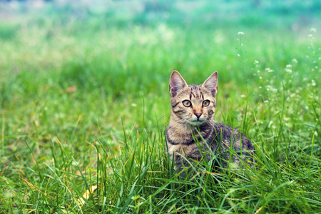 Cat sitting in the grass on the lawn