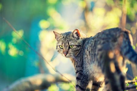 Cat walking outdoor in a garden in spring Stock Photo