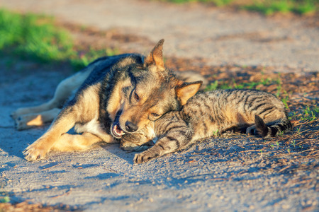 Dog and cat best friends playing together outdoor. Lying on the back together