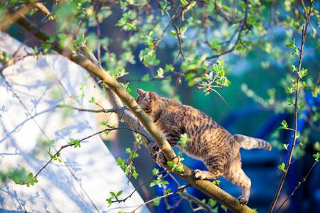 Cat walking on a branch on a tree in garden