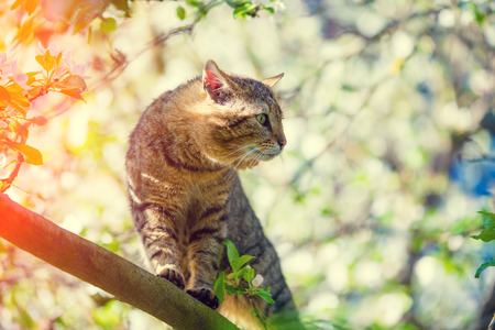 Portrait of a cat on a branch of an apple tree in garden in spring Stock Photo