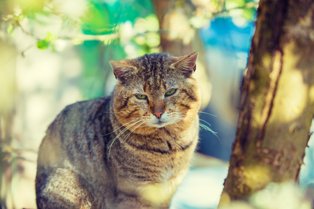 Portrait of the cat on a branch of an apple tree in garden in spring