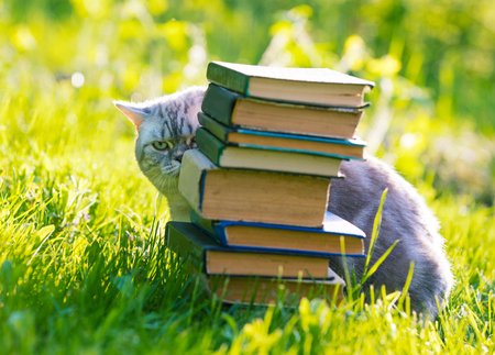 Cute cat sitting on a grass and hiding behind a pile of books.