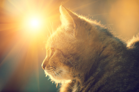 屋外太陽に対して横になっている猫のシルエット。 写真素材