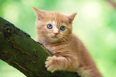 Red-haired kitten sitting on a tree in the garden
