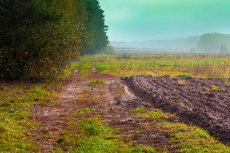 suelo arenoso: Rural landscape in the morning. Arable field near forest Foto de archivo