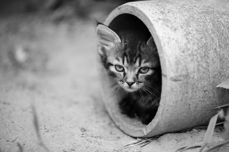 peep: Stray kitten peeking out pipe in black and white
