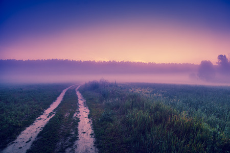 A country road through the field in a misty morning