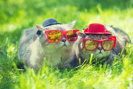 Two cats wearing sunglasses and hats lays in a grass in sunny day