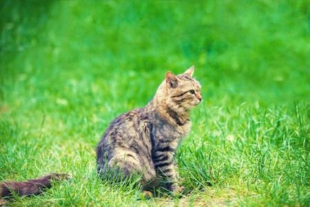 Cat sitting  in a green grass