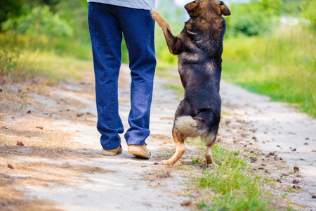 2 way: A man walking with a dog on a dirt road in summer