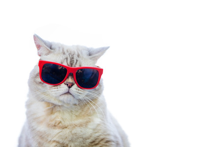 Portrait of cat wearing sunglasses isolated on white background
