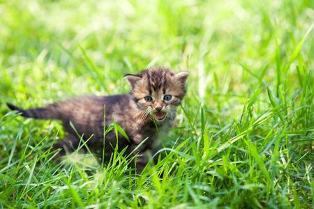 A small kitten in green grass