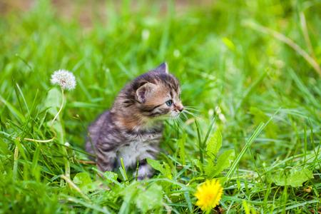 Little kitten sitting in green grass Stock Photo