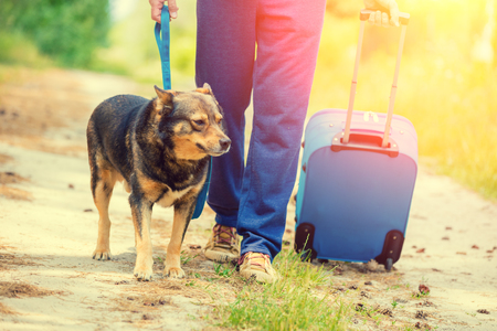 run way: A man walks with a dog on a leash along a country road. A man holds a travel bag Stock Photo