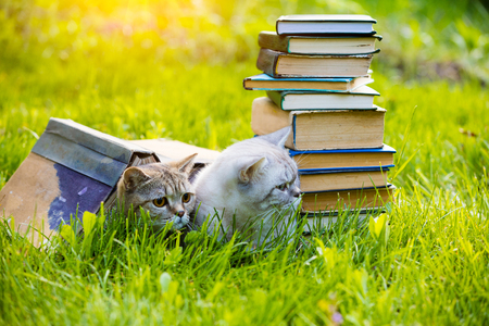 Two cute clever cats lying on the grass near the pile of books. Cats covered with big grunge book Stock Photo