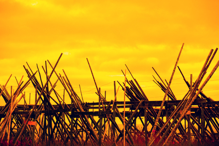 Wooden rack for air-drying fish against the golden sunset sky. Fishing village, Lofoten Islands, Norway