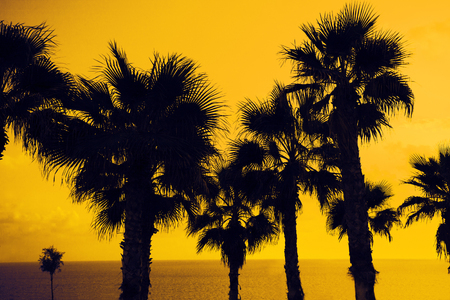 Magic pink sunset over tropical beach Stock Photo