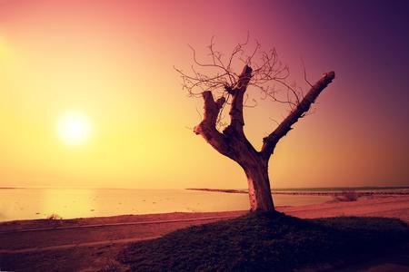Desert Dead sea shore at sunrise Stock Photo