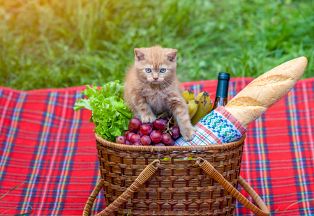 produits alimentaires: Little kitten sitting on the picnic basket outdoors Banque d'images