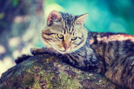 Cute little kitten lies on the tree in the garden