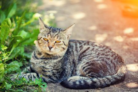 suelo arenoso: Cat lays outdoors in summer
