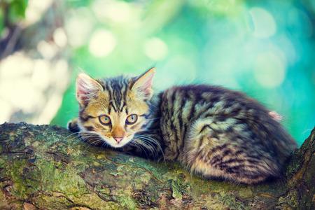 Cute little kitten lies on a tree branch in the garden