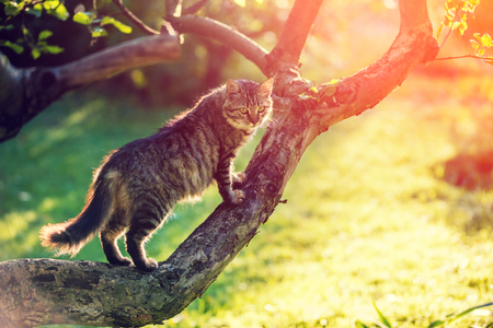 Cute cat sitting on a branch of the tree in the garden