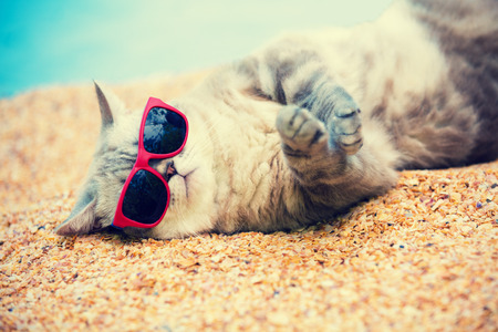 Ð¡at wearing sunglasses relaxing on the beach Foto de archivo