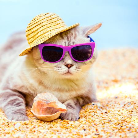 Kat draagt zonnebril en zonnehoed ontspannen op het strand