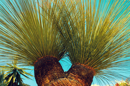 Tropical palm tree leaves against blue sky background