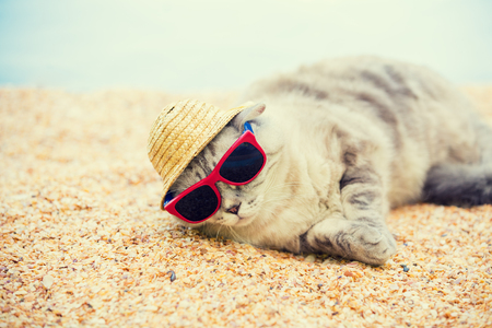 coquina: Cat wearing sunglasses and sun hat relaxing on the beach