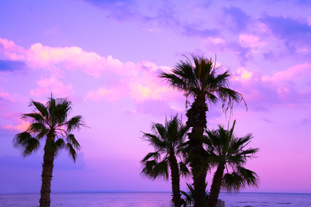 Palm trees against a purple sunset sky. Tropical evening landscape. Beautiful nature. Stock Photo