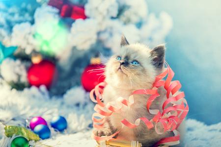 christmas pussy: Portrait of a little cute kitten entangled in Christmas streamer. Kitten sitting near decorated fir tree Stock Photo