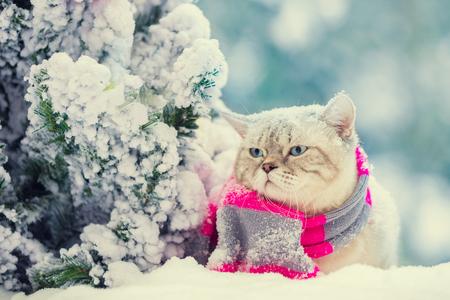 Portrait of a cat, wearing scarf, outdoor in snowy winter near fir tree