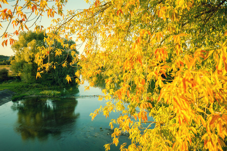 crick: Autumn landscape with a lake. Branches with yellow leaves over the lake