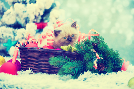 little cute kitten entangled in Christmas streamer sits in the basket. Kitten sitting near decorated fir tree