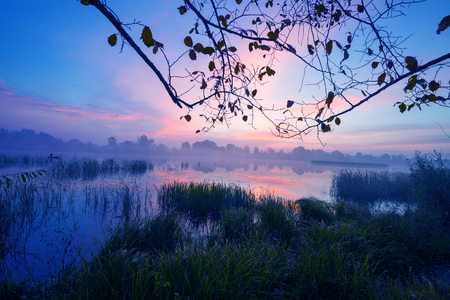 crick: Early morning, dawn over the lake. Misty morning, rural landscape, wilderness, mystical feeling