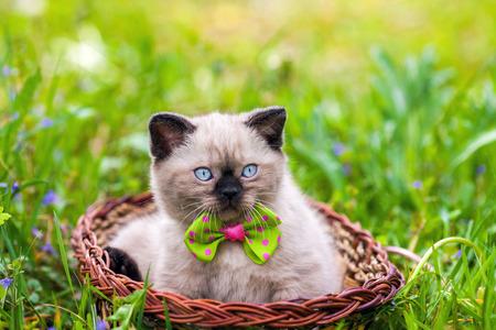 Little kitten wearing bow tie lying in a basket on the grass