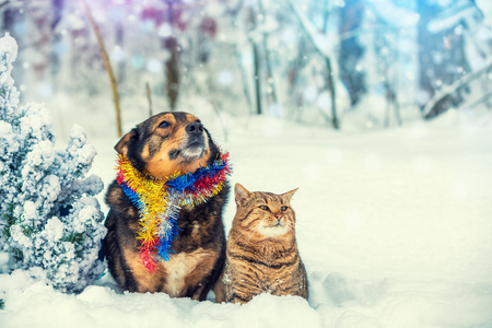 Dog and cat sitting together outdoor in the snowy forest near fir tree. Christmas concept Archivio Fotografico